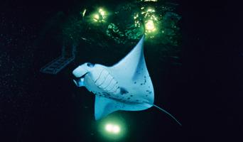 Ночные подводные жители