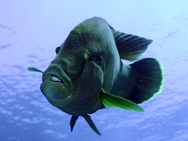 Рыбы фото рыб морские рыбы