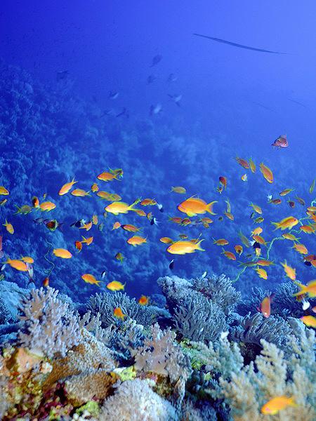 Рифы кораллы коралловые рифы