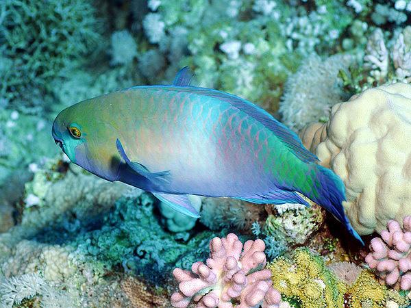 Мир днем морские рыбы подводный мир