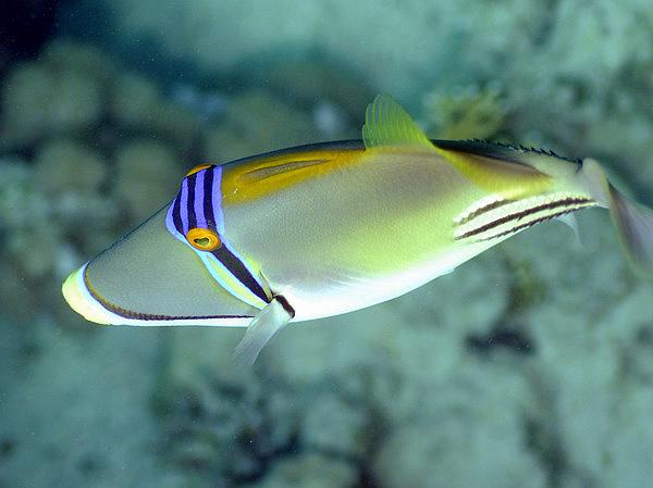 Рыбы фото рыб морские рыбы предыдущее